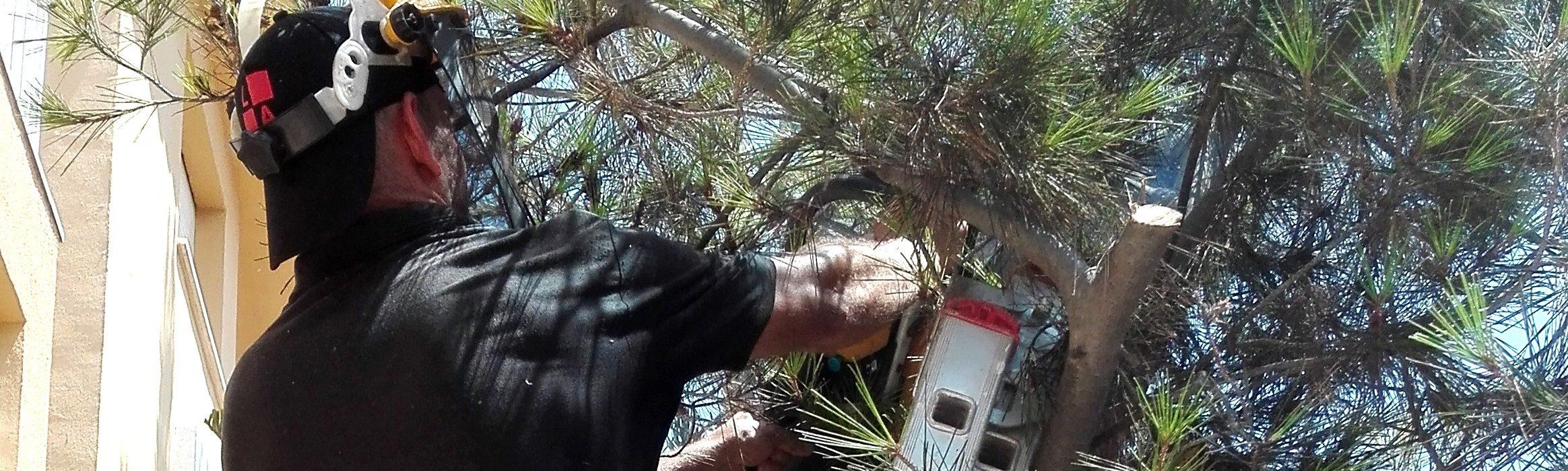 Limpiezas y Mantenimientos Ayala - Jardinería